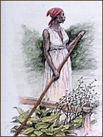 An anonymous slave woman [courtesy Northwind Picture Archives).